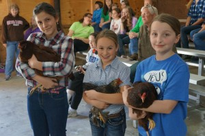 Cover photo for 4-H Rabbit and Chicken Show