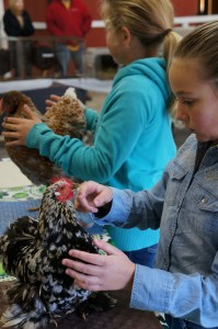 Cover photo for Youth Participate in Rabbit and Chicken Show