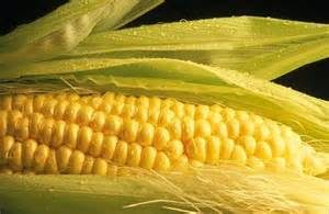 Cover photo for Corn Referendum