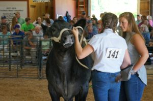 Cover photo for 2017 4-H Livestock Show Results