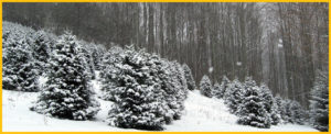 Cover photo for 4-H Holiday Greenery Fundraiser