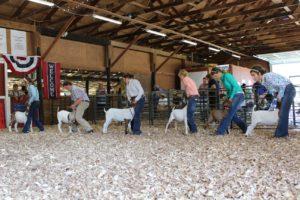 2018 Livestock Show Goats