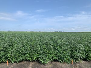 Cover photo for 2021 North Carolina Soybean Yield Contest